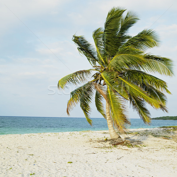 Cayo Sabinal, Camaguey Province, Cuba Stock photo © phbcz