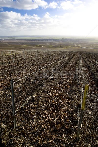 vineyards of Champagne Region, Burgundy, France Stock photo © phbcz