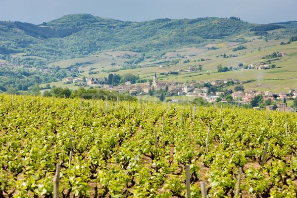 vineyars near Julienas, Beaujolais, Burgundy, France Stock photo © phbcz