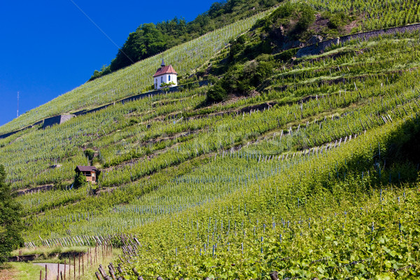 grand cru vineyard and Chapel of St. Urban, Thann, Alsace, Franc Stock photo © phbcz