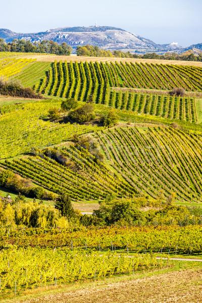 őszi alsó Ausztria természet ősz vidék Stock fotó © phbcz