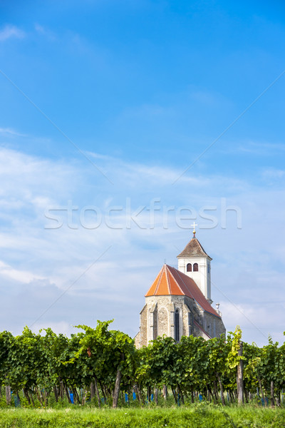 church with vineyard, Kirchenberg, Lower Austria, Austria Stock photo © phbcz