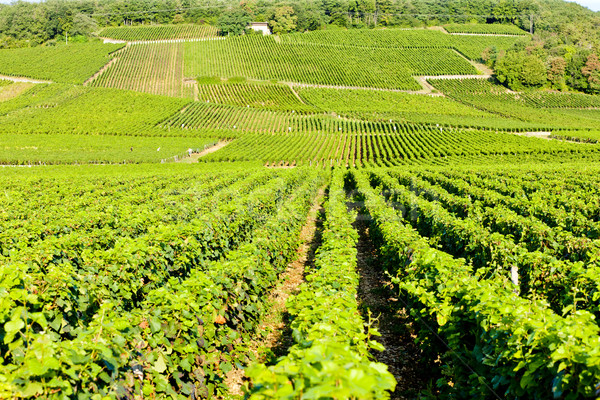 grand cru vineyards of Echezeaux, Burgundy, France Stock photo © phbcz