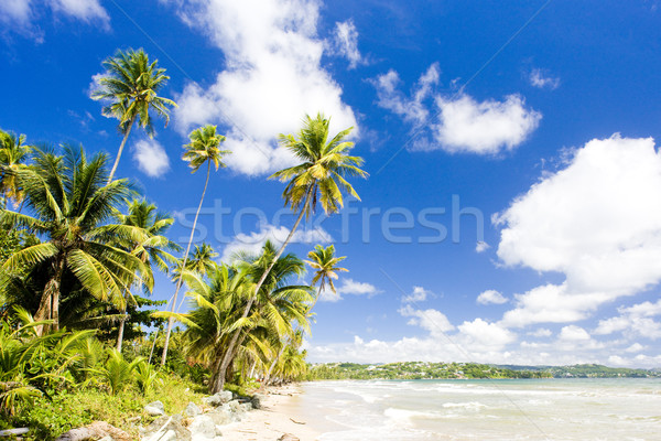 Rockly Bay, Tobago Stock photo © phbcz