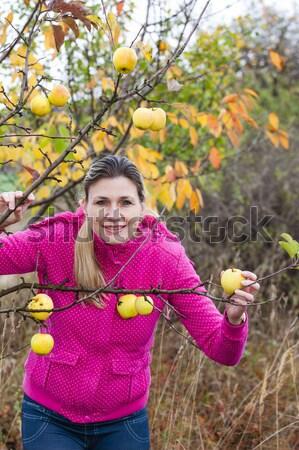 Nő őszi almafa nők alma gyümölcs Stock fotó © phbcz