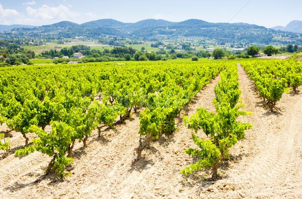 vineyards near La Cadiere d''Azur, Provence, France Stock photo © phbcz