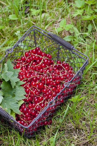 Vörös ribiszke kosár fű gyümölcs egészség szabadtér Stock fotó © phbcz
