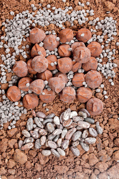 chocolate truffles and cocoa beans in cocoa Stock photo © phbcz