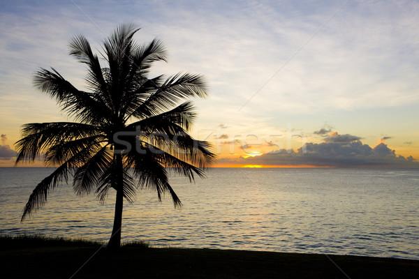 sunset over Caribbean Sea, Barbados Stock photo © phbcz