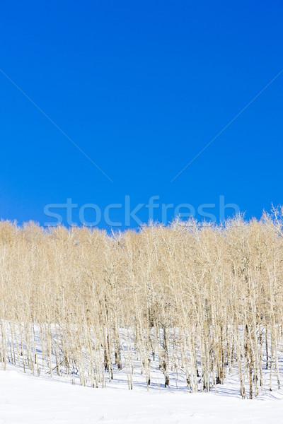 Zimą Utah USA lasu krajobraz śniegu Zdjęcia stock © phbcz