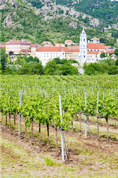 Durnstein, vineyard in Wachau Region, Lower Austria, Austria Stock photo © phbcz