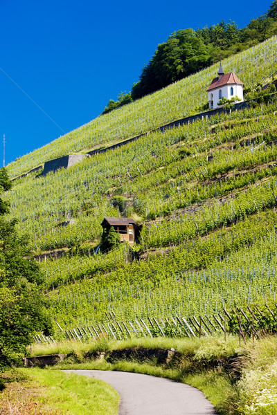 Stock photo: grand cru vineyard and Chapel of St. Urban, Thann, Alsace, Franc