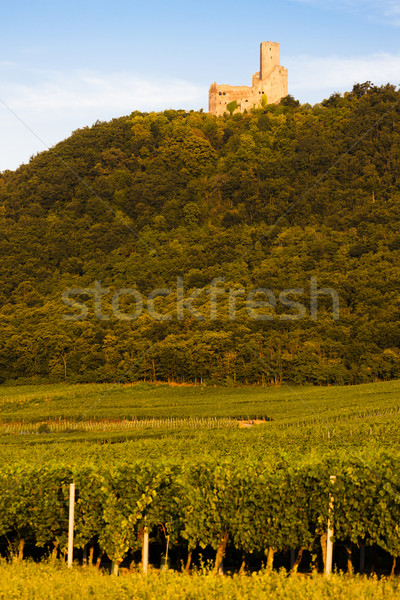 castle Ortenbourg, Alsace, France Stock photo © phbcz