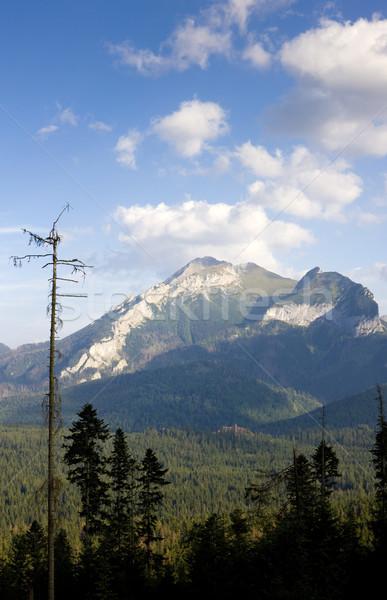 Belianske Tatry (Belianske Tatras), Slovakia Stock photo © phbcz