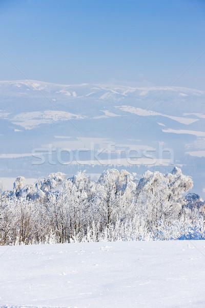 Сток-фото: гор · зима · Чешская · республика · дерево · лес · пейзаж