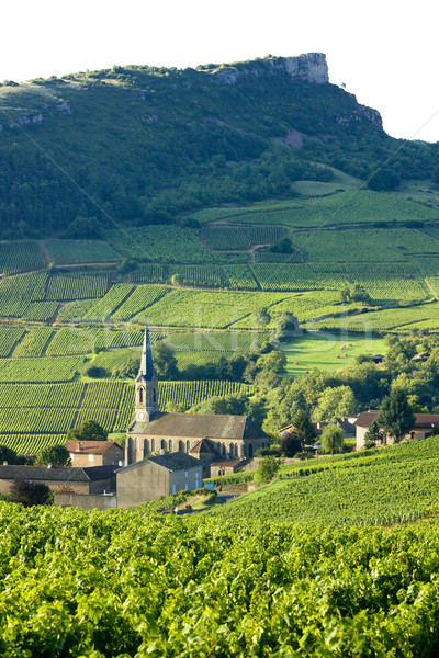 Vergisson with vineyards, Burgundy, France Stock photo © phbcz