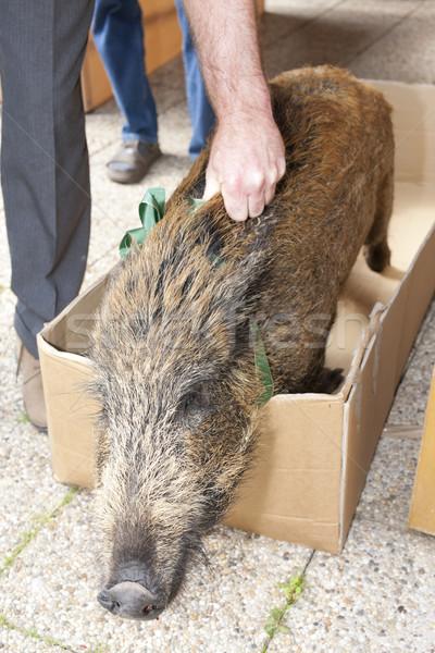 кабан стороны смерти свинья мертвых Сток-фото © phbcz