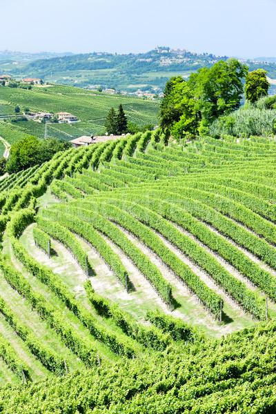 vineyars near Barbaresco, Piedmont, Italy Stock photo © phbcz
