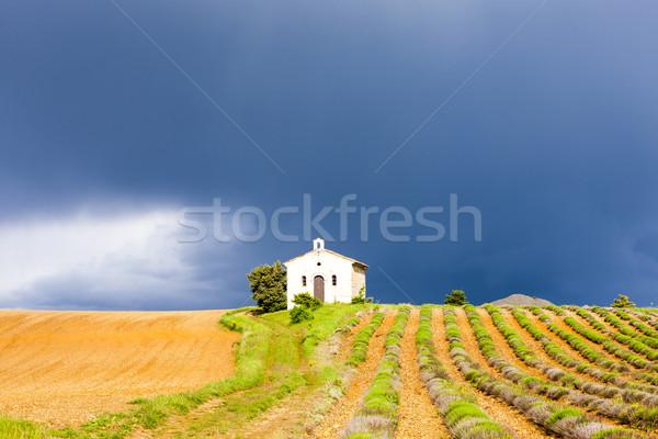 chapel with lavender field, Plateau de Valensole, Provence, Fran Stock photo © phbcz