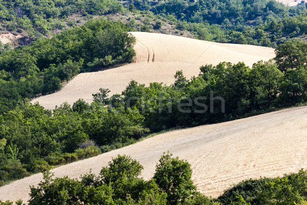 fields with trees, Provence, France Stock photo © phbcz