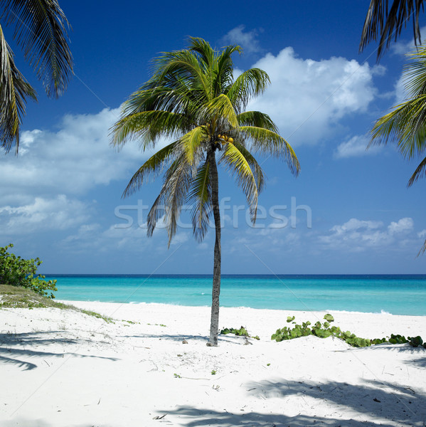 Küba plaj su ağaç manzara deniz Stok fotoğraf © phbcz
