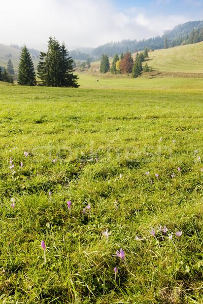 meadow in blossom, Nizke Tatry (Low Tatras), Slovakia Stock photo © phbcz