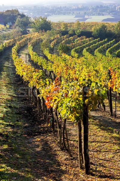 Ansicht herbstlich senken Österreich Landschaft Herbst Stock foto © phbcz