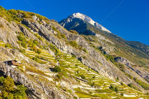 Region Szwajcaria charakter podróży rolnictwa dekoracje Zdjęcia stock © phbcz