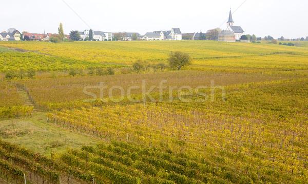 Hochheim, Rheingau, Germany Stock photo © phbcz