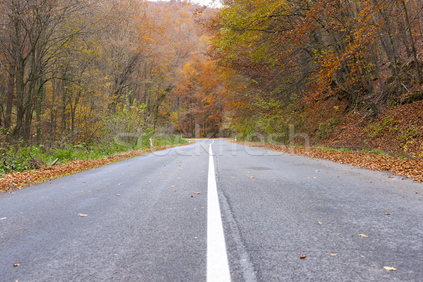 empty road in autumn, Slovakia Stock photo © phbcz