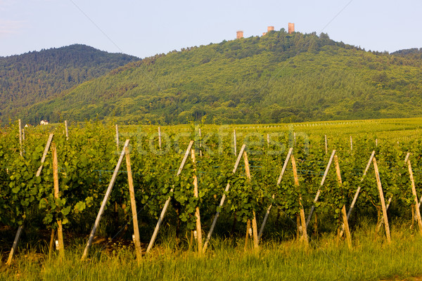 Ruínas castelo França paisagem plantas vinha Foto stock © phbcz