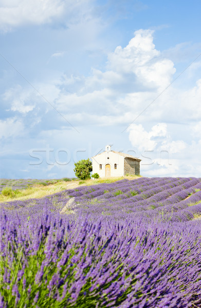 Kápolna levendula mező fennsík virág épület növények Stock fotó © phbcz