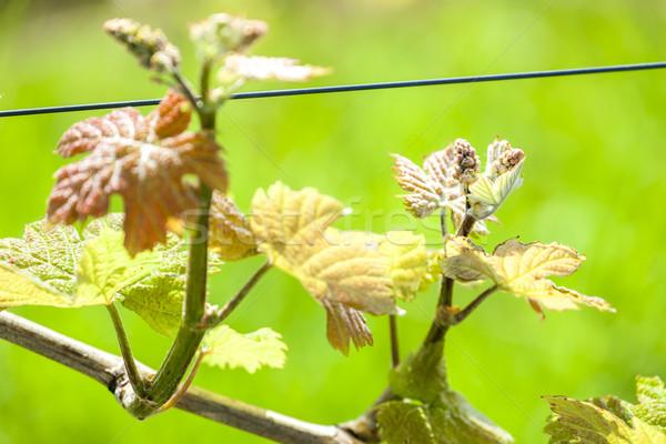 つる 自然 緑 工場 農業 ストックフォト © phbcz