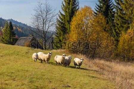 Nyáj tehenek ősz alsó Ausztria természet Stock fotó © phbcz