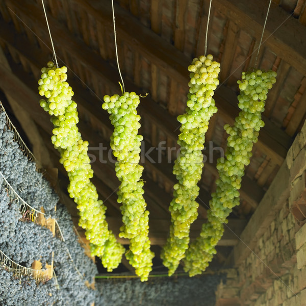 grapes drying for straw wine, Biza Winery, Cejkovice, Czech Repu Stock photo © phbcz
