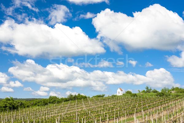 spring vineyard near Hnanice, Southern Moravia, Czech Republic Stock photo © phbcz