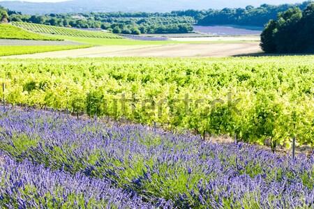 Champ de lavande département fleur domaine plantes paysages Photo stock © phbcz