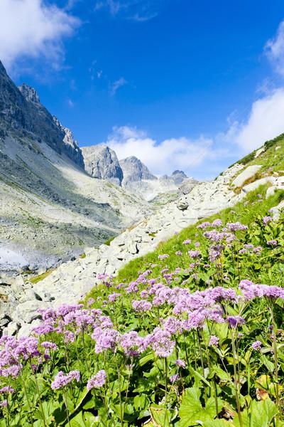 valley under Prielom, Vysoke Tatry (High Tatras), Slovakia Stock photo © phbcz