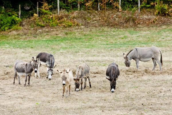 Spanyolország vidék mezőgazdaság kint emlős vidék Stock fotó © phbcz