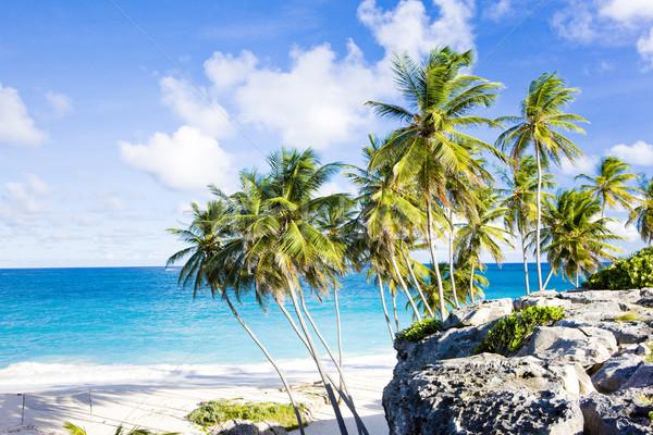 ストックフォト: ボトム · バルバドス · カリビアン · ツリー · 風景 · 海