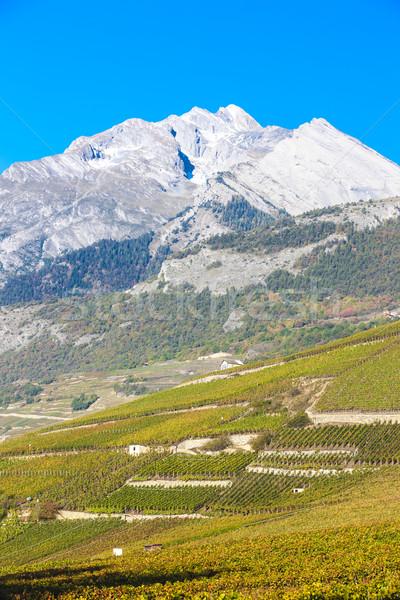 Região Suíça natureza neve videira agricultura Foto stock © phbcz