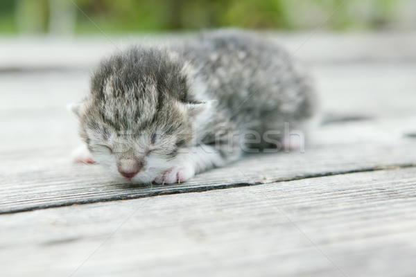 Chaton chats animaux dormir animaux de compagnie Photo stock © phbcz
