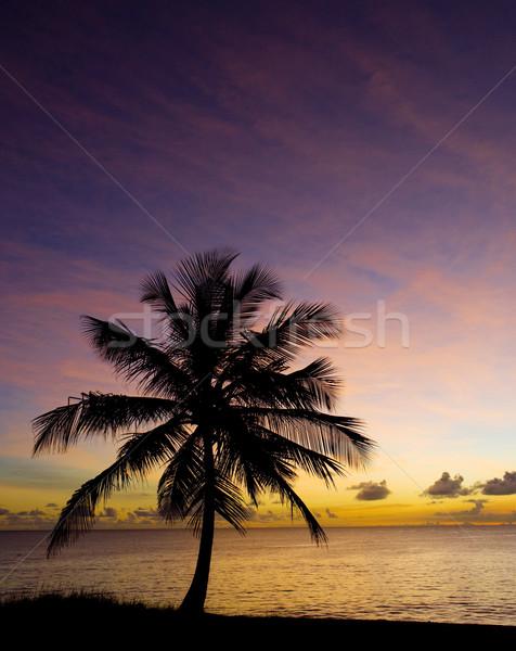 закат Карибы морем Барбадос дерево пейзаж Сток-фото © phbcz