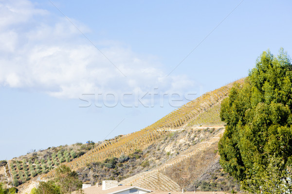 vineyards, Hollywood, Los Angeles, California, USA Stock photo © phbcz