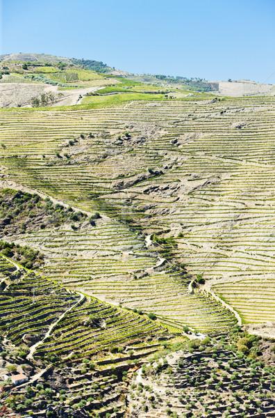 Vallei Portugal plant Europa natuurlijke buitenshuis Stockfoto © phbcz