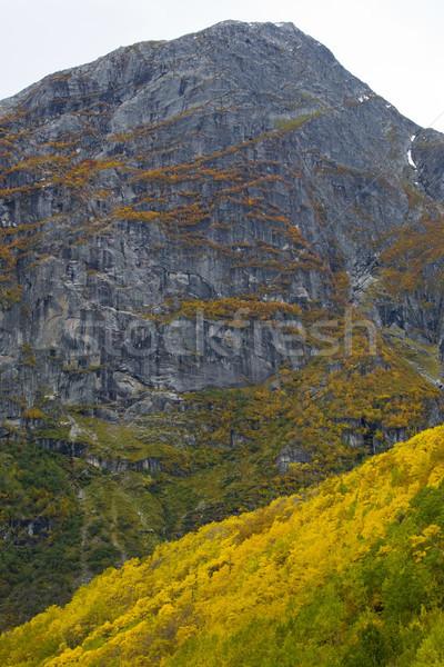 Tájkép gleccser park fa erdő hegyek Stock fotó © phbcz