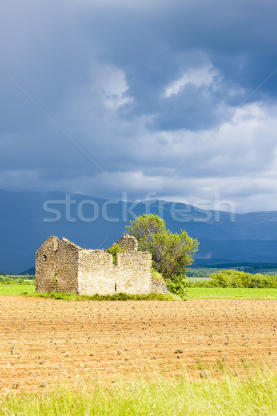 Stock photo: field with a ruin of house and tree, Plateau de Valensole, Prove