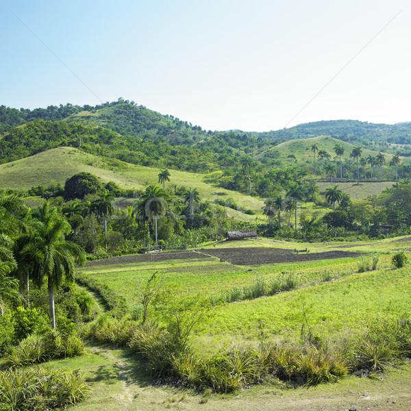 Holguin Province landscape, Cuba Stock photo © phbcz