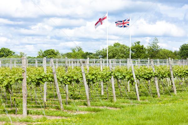 Anglii banderą roślin Europie rolnictwa odkryty Zdjęcia stock © phbcz