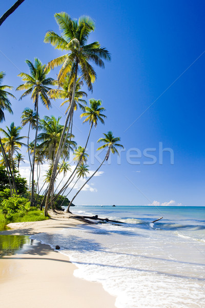 Northern coast of Trinidad, Caribbean Stock photo © phbcz
